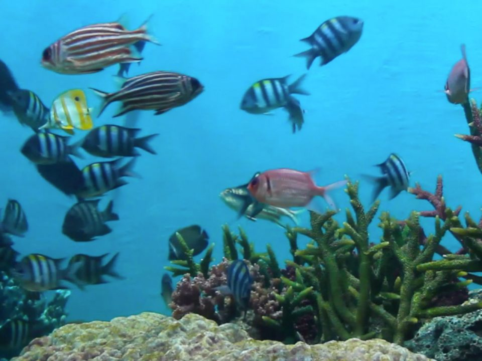 nuovo-sito-fishes-and-sports