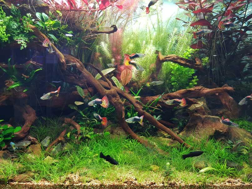 Fishesandsports_news9