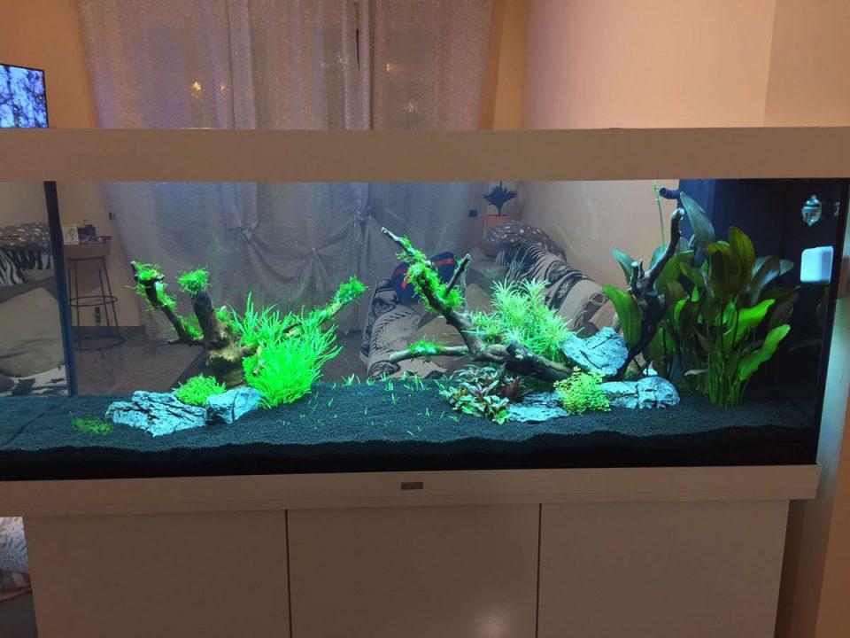 acquario di Gianmarco