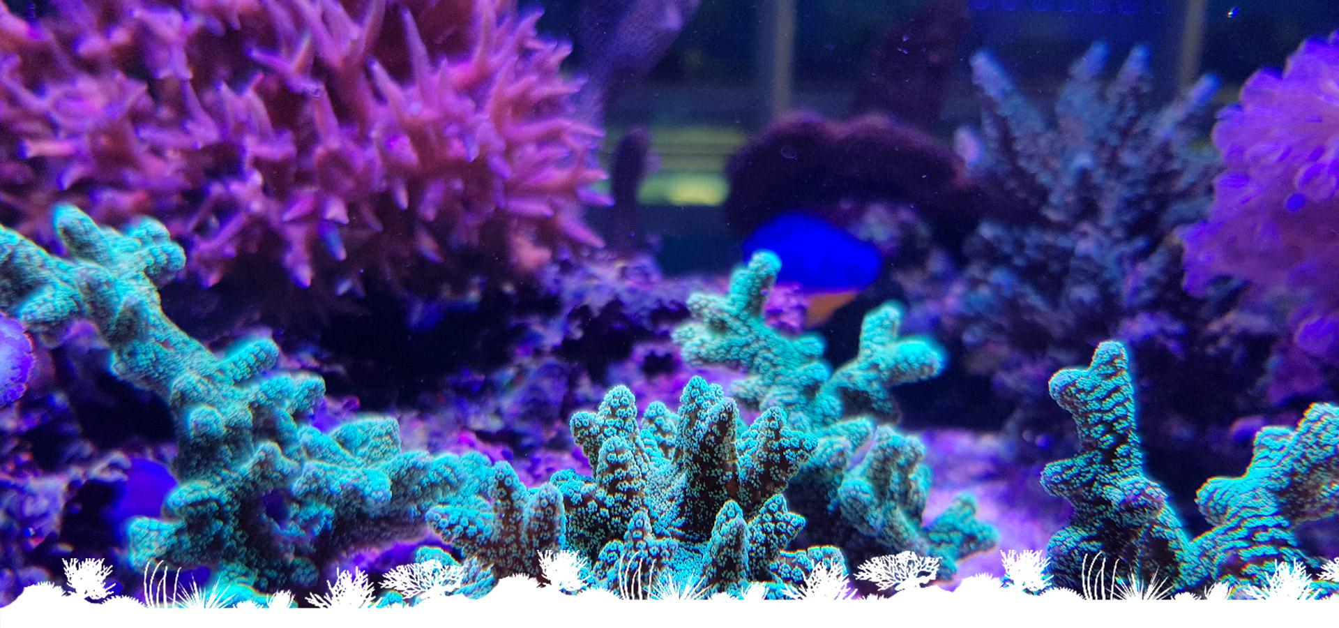 vendita-coralli-marini