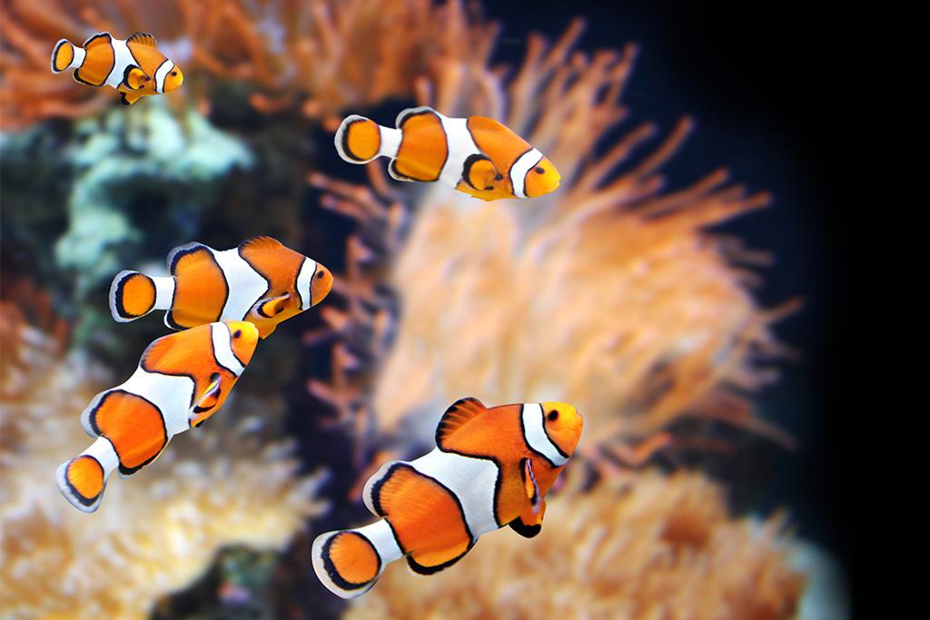 Negozio acquari Genova Fishes and Sports