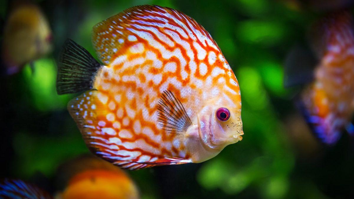 Consigli per il vostro primo acquario
