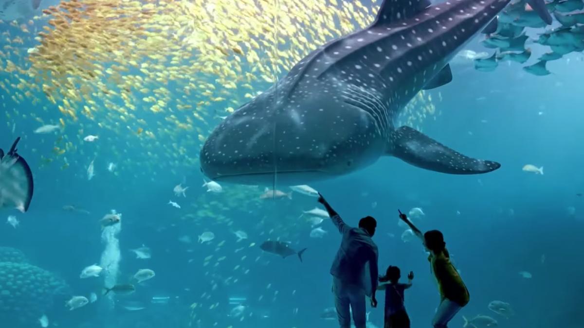 acquari più grandi al mondo