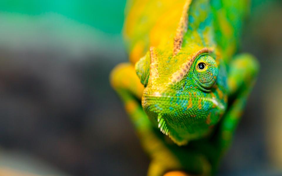10 curiosità sui rettili